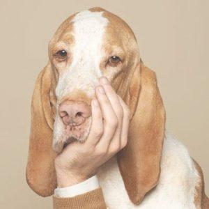 foto com cão em pose humana